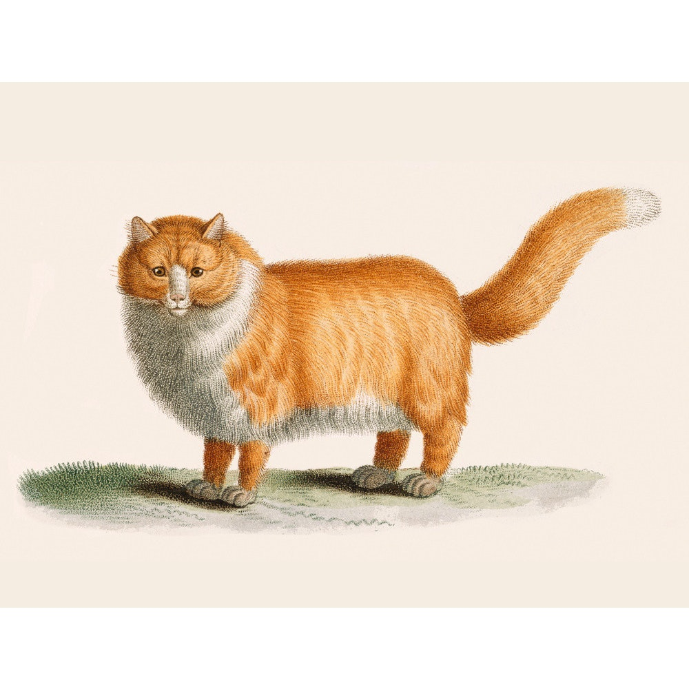 A ginger cat print