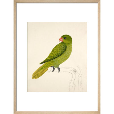 Blue-Backed Parrot print in natural frame
