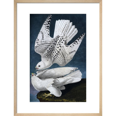 Iceland or Jer Falcon print in natural frame