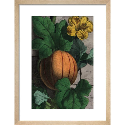 Melon print in natural frame