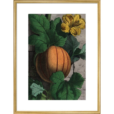 Melon print in gold frame