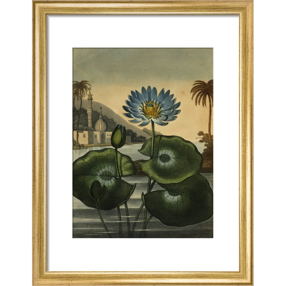 Blue lotus print in gold frame