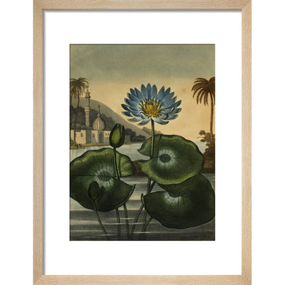 Blue lotus print in natural frame