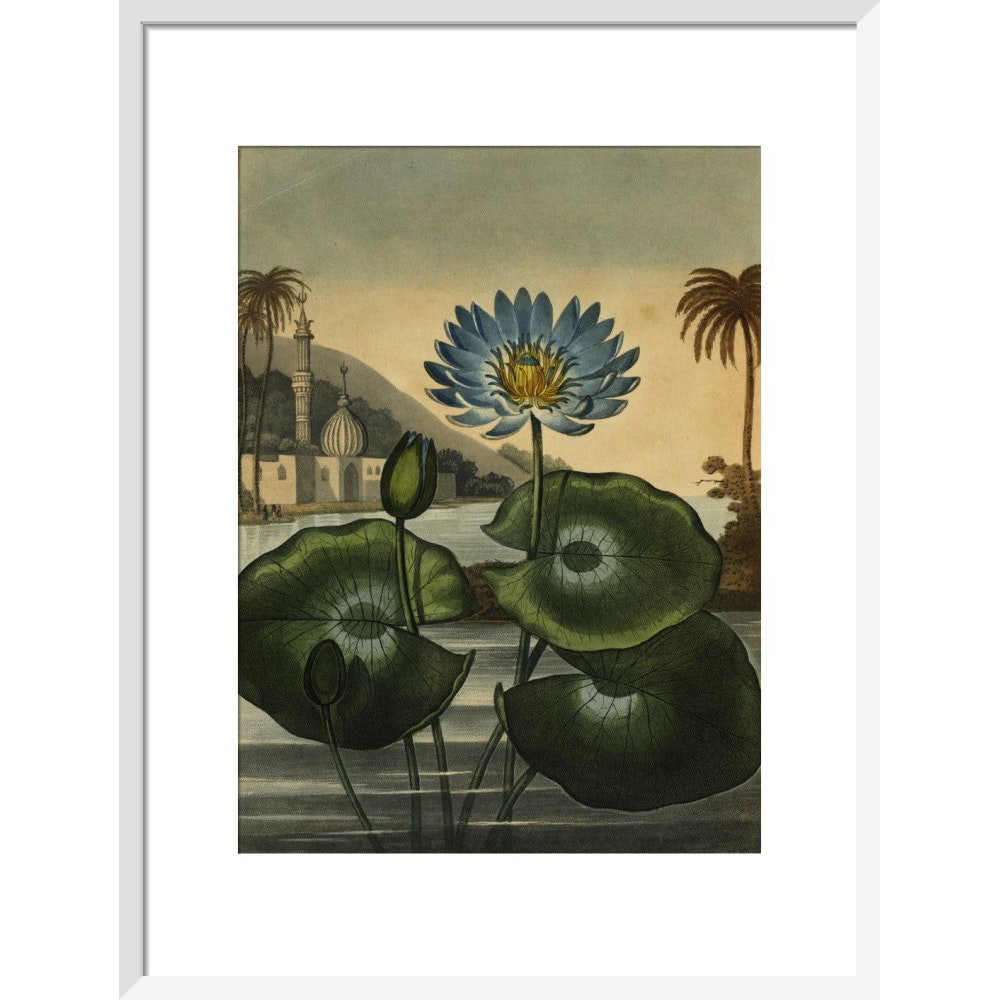 Blue lotus print in white frame