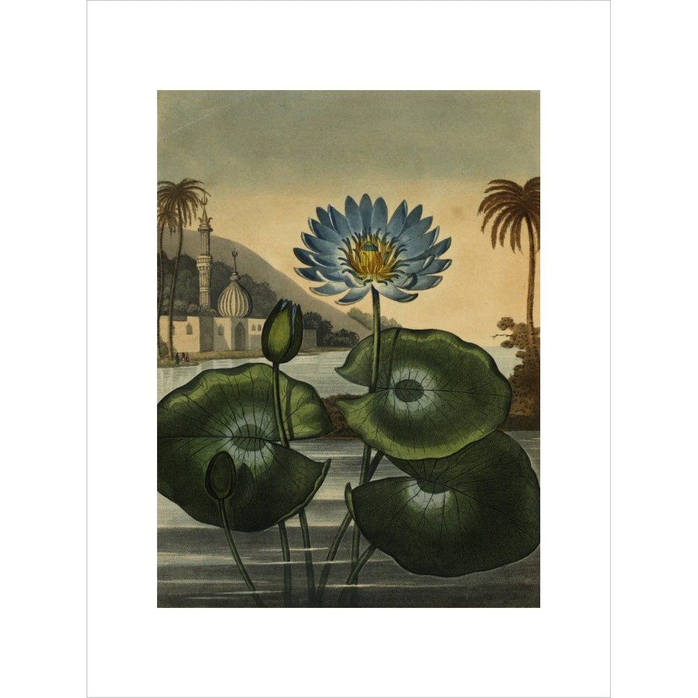 Blue lotus print unframed