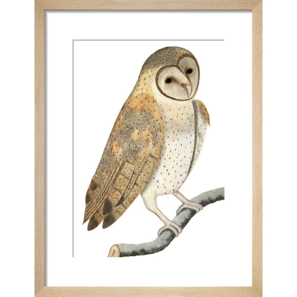 Owl print in natural frame