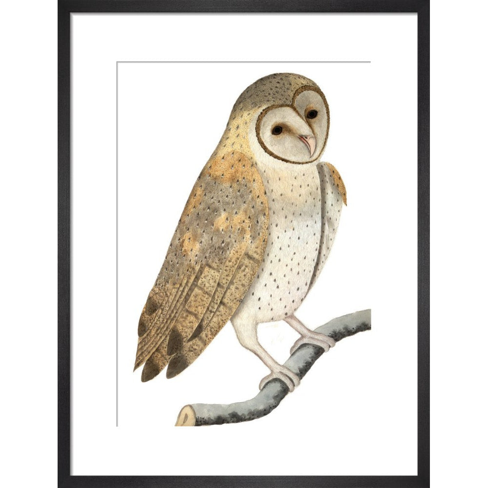 Owl print in black frame