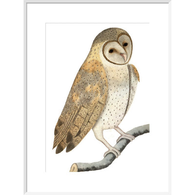 Owl print in white frame