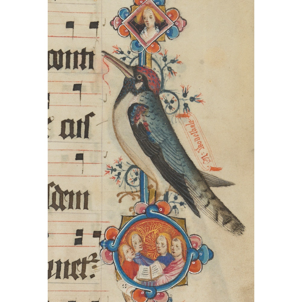 Woodpecker detail from the Sherborne Missal print