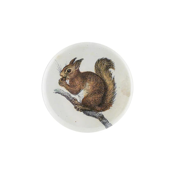 Little Baby Squirrel Mirror Button