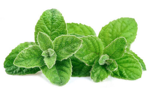 bitter-foods-peppermint