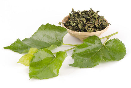 white-mulberry-leaf-benefits-mulberry-tea