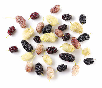 white-mulberry-leaf-benefits-white-vs-purple