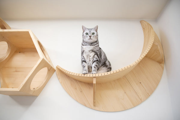 interior design idea for cat lovers
