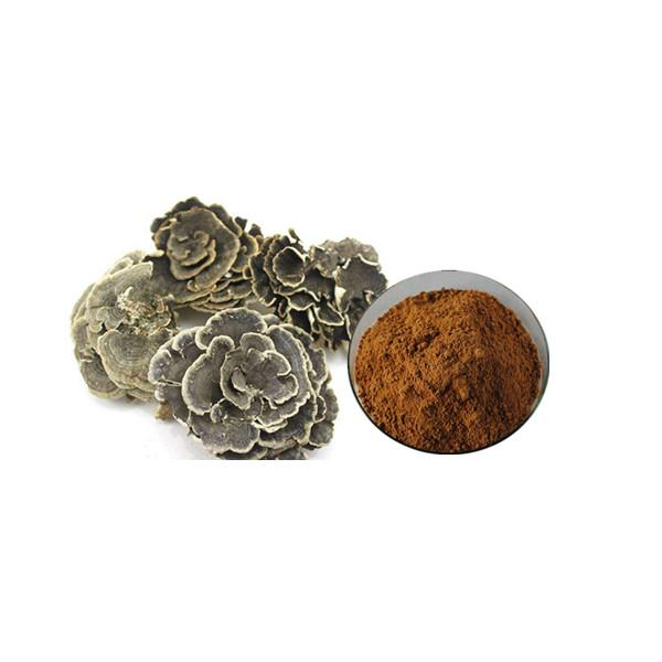 Coriolus Versicolor Extract Bulk Mushroom Extract Manufacturer and Supplier - Laybio Natural