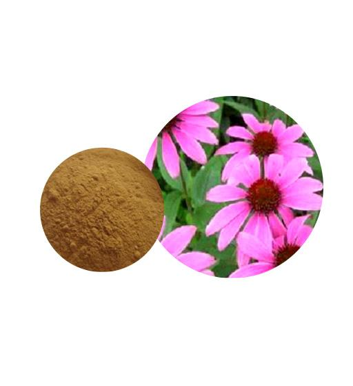 Echinacea Extract Bulk Herbal Extracts Manufacturer and Supplier - Laybio Natural