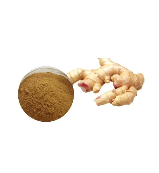 Organic Ginger Extract Bulk Herbal Extracts Manufacturer and Supplier - Laybio Natural