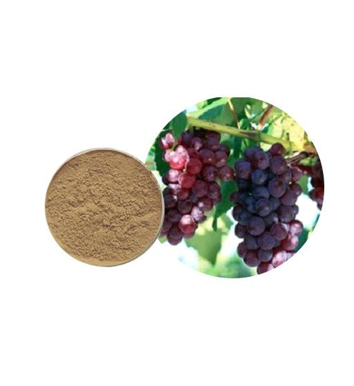 Grape Seed Extract Bulk Herbal Extracts Manufacturer and Supplier - Laybio Natural