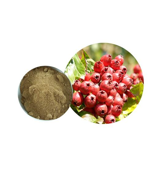 Organic Hawthorn Berry Extract Bulk Herbal Extracts Manufacturer and Supplier - Laybio Natural