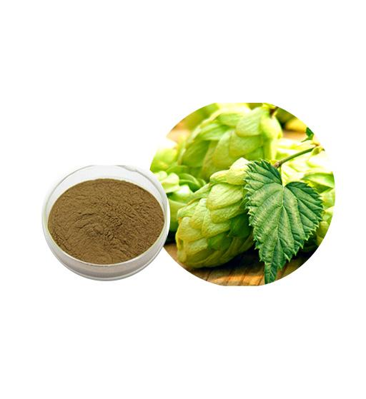Hops Extract Bulk Herbal Extracts Manufacturer and Supplier - Laybio Natural