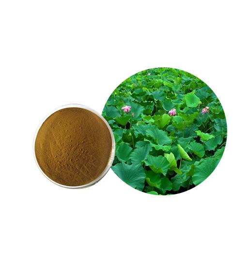 Lotus Leaf Extract Bulk Herbal Extracts Manufacturer and Supplier - Laybio Natural