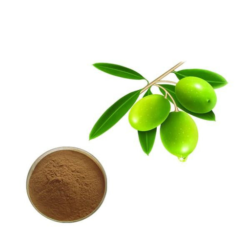 Olive Leaf Extract Bulk Herbal Extracts Manufacturer and Supplier - Laybio Natural