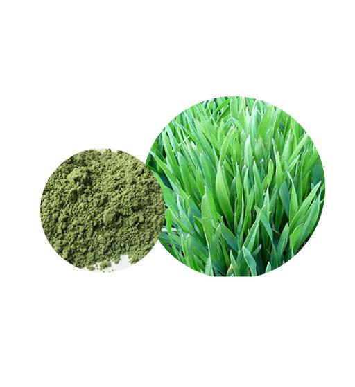 Organic Barley Grass Powder Bulk Vegetable Powder Manufacturer and Supplier - Laybio Natural