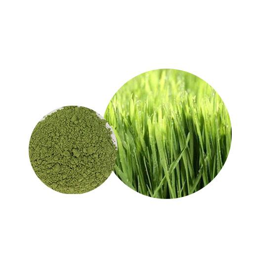 Organic Wheat Grass Powder Bulk Vegetable Powder Manufacturer and Supplier - Laybio Natural