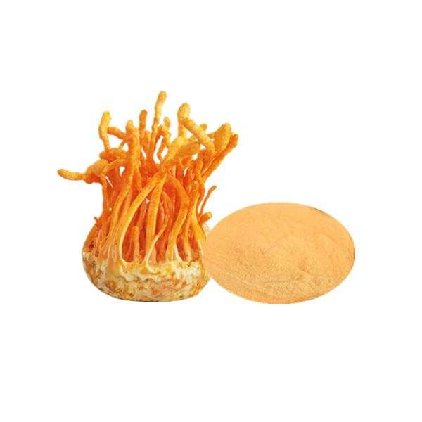 Organic Cordyceps Militaris Extract Bulk Mushroom Extract Manufacturer and Supplier - Laybio Natural