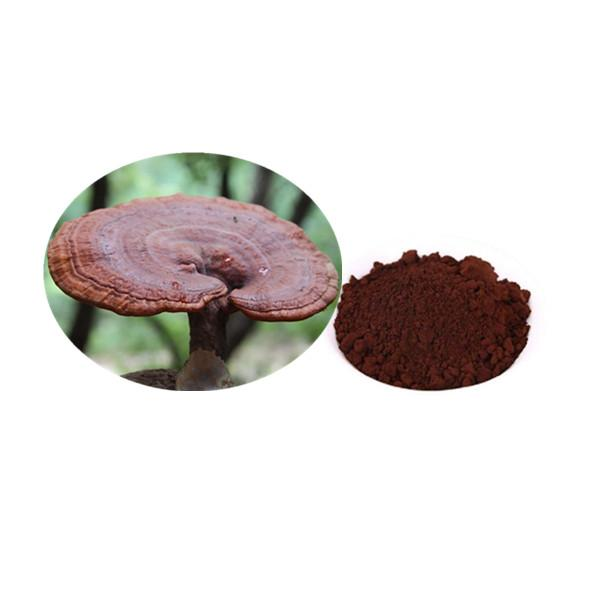 Organic Ganoderma Spore Powder Bulk Mushroom Extract Manufacturer and Supplier - Laybio Natural