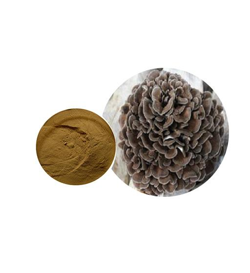 Organic Maitake Mushroom Extract Bulk Mushroom Extract Manufacturer and Supplier - Laybio Natural