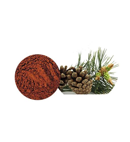 Pine Bark Extract Bulk Herbal Extracts Manufacturer and Supplier - Laybio Natural