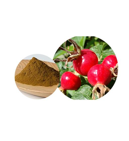 Rosehips Extract Bulk Herbal Extracts Manufacturer and Supplier - Laybio Natural