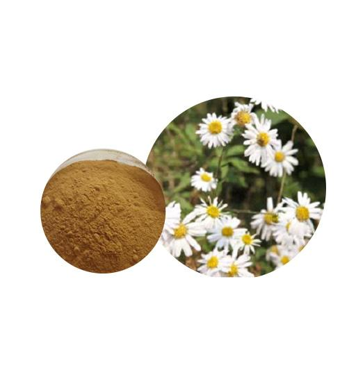Feverfew Extract Bulk Herbal Extracts Manufacturer and Supplier - Laybio Natural