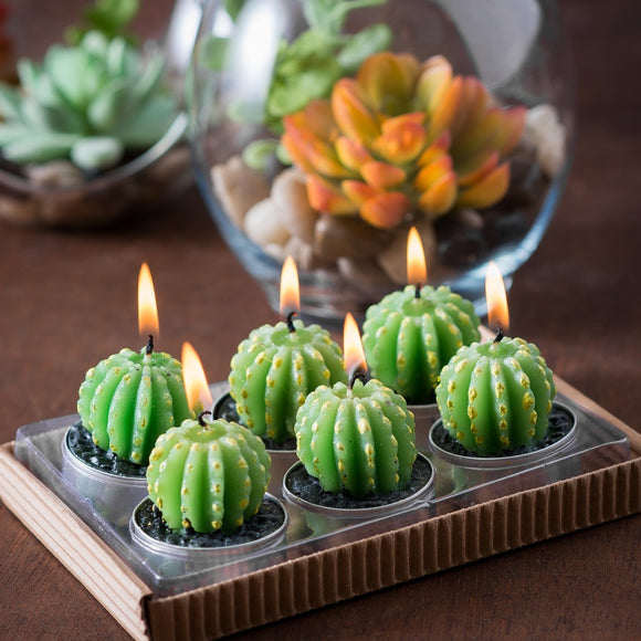 Gifts > Gifts For Her > Barrel Cactus Tealights in Gift Box
