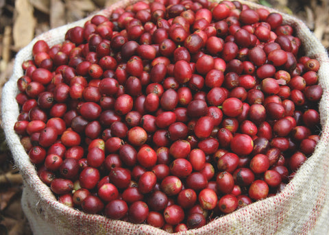 Himalayan Specialty Coffees - Himalayan Coffee Importers
