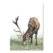 Load image into Gallery viewer, Classic Scandinavian Wall Art Fine Art Rustic Nordic Nature Tree Rings Deer Canvas Wood Prints Minimalist Pictures For Modern Country Home Decor
