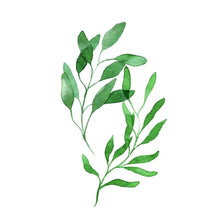 Load image into Gallery viewer, Nordic Green Leaves Natural Simple Modern Wall Art Plant Species Canvas Pictures Posters For Kitchen Living Room or Home Office Decor