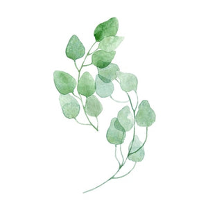 Nordic Green Leaves Natural Simple Modern Wall Art Plant Species Canvas Pictures Posters For Kitchen Living Room or Home Office Decor