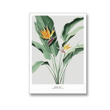 Load image into Gallery viewer, Tropical Strelitzia Flora Botanical Study Fine Art Canvas Prints Nordic Wall Art Nature Paintings For Living Room Dining Room Modern Home Decor