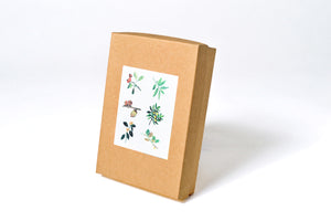 Assorted Box Set: Plant AP3