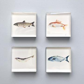 Magnets Fish - MG6