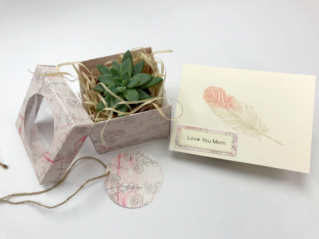 Succulent In Marbled Gift Box for Mother's Day - OakPo Paper Co.