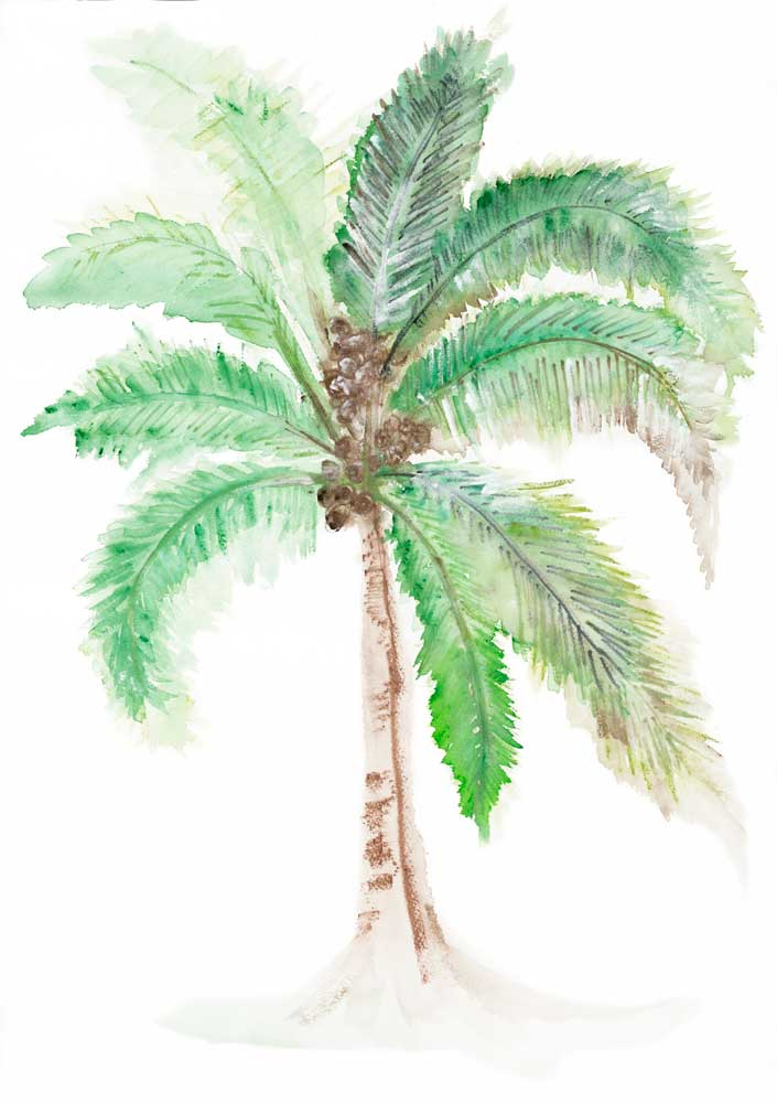For the Love of Coconuts Tropical Art on Canvas