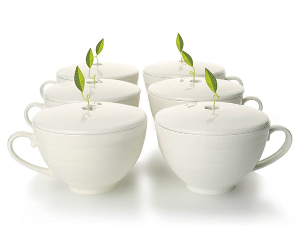 CAFÉ CUP SET OF SIX PORCELAIN CUPS