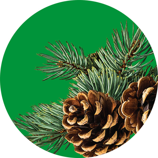image of pine needles and pine cone
