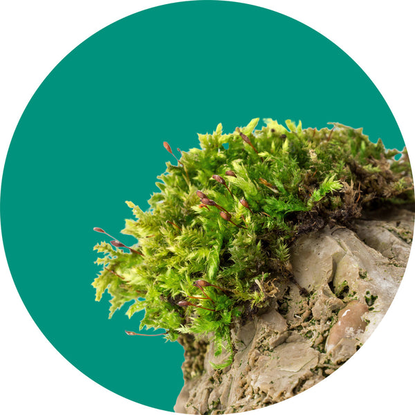 image of moss growing on rocks