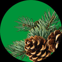 Balsam Fir and Spruce