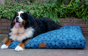 Parabola Parade Dog Bed