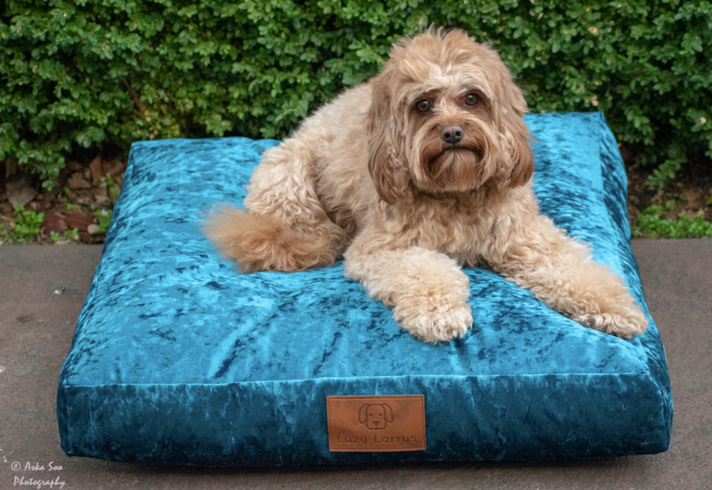 I dream of velveteen - Aqua Dog Bed